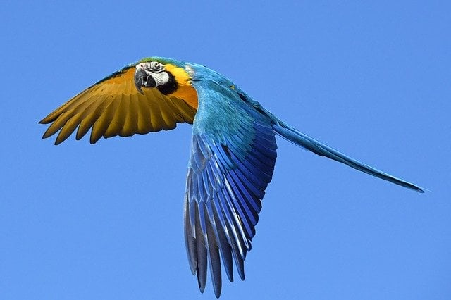 Parrot of rainforest