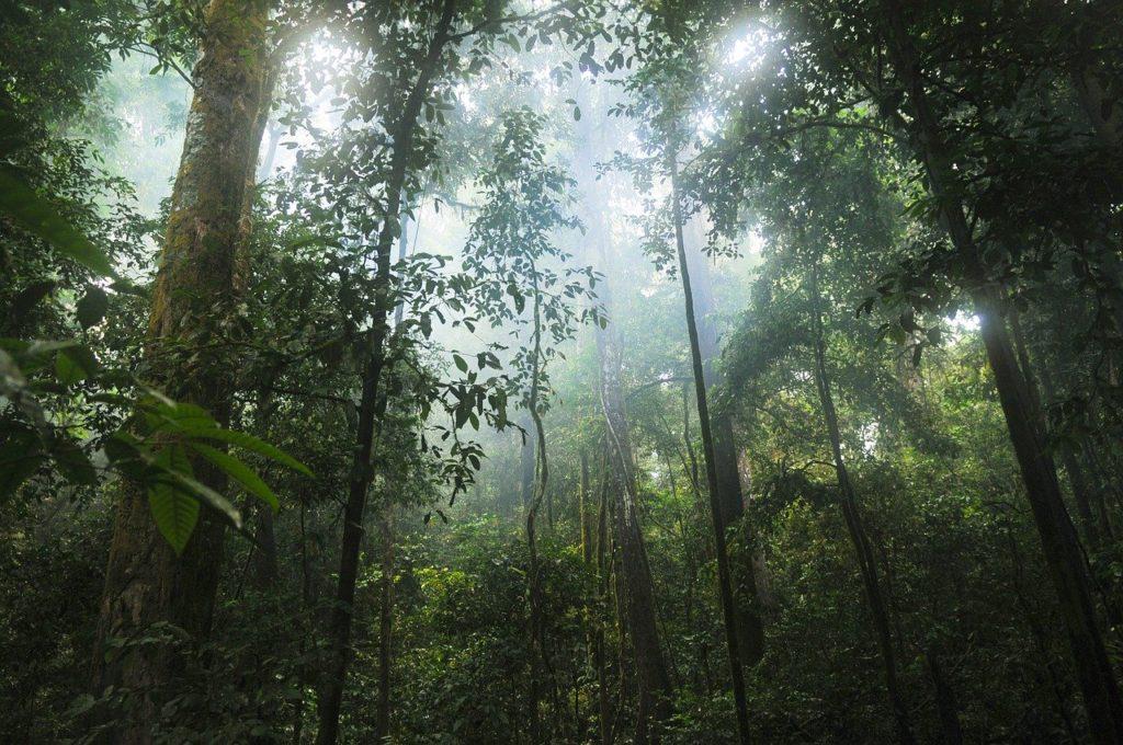 Dense tropical rainforest of Africa