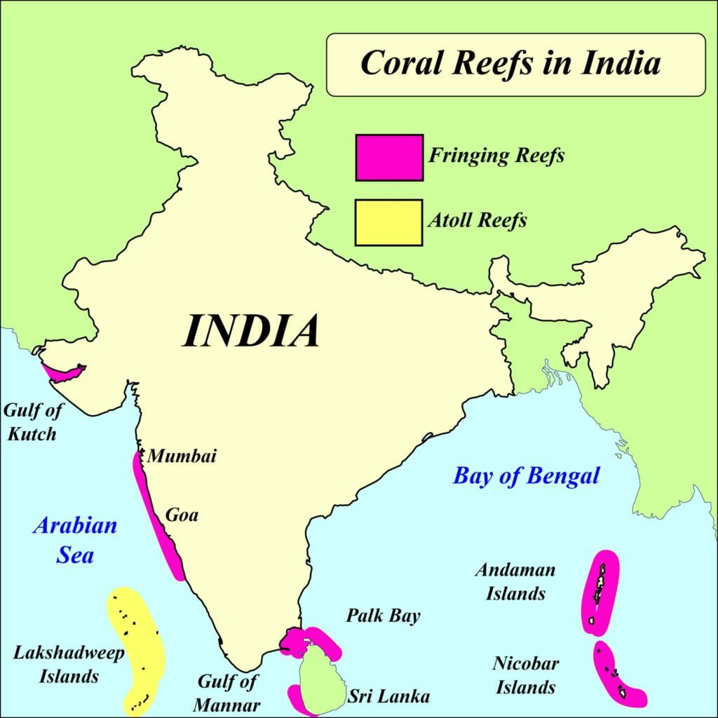 Coral reef in India