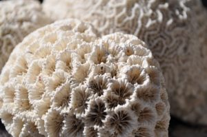 Bleaching of coral reefs