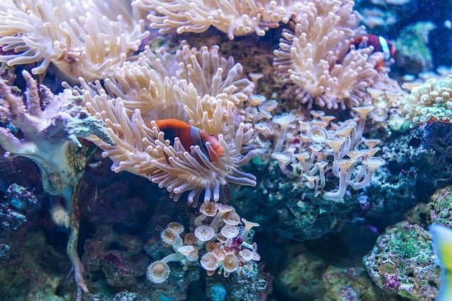 are coral reefs dying