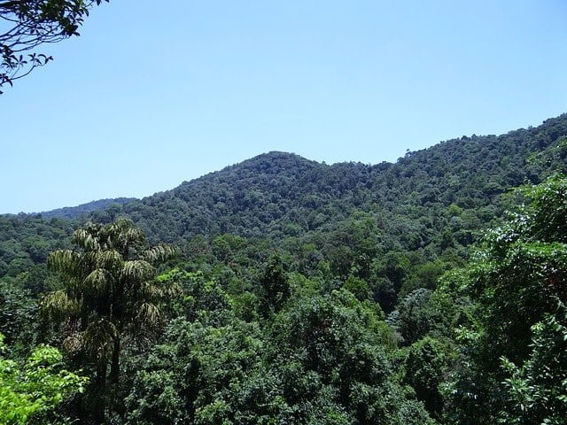 very dense forests