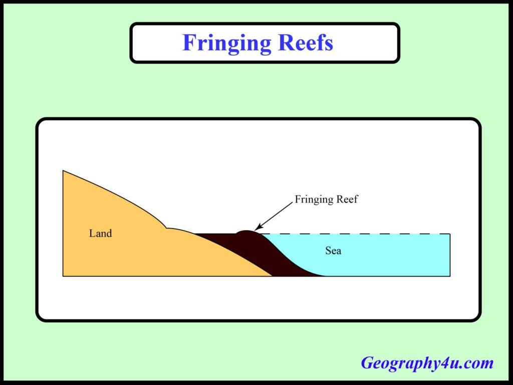 Coral reef drawing- fringing reef