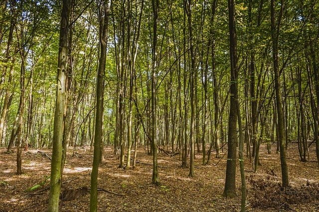 Moderately dense forests in Bihar