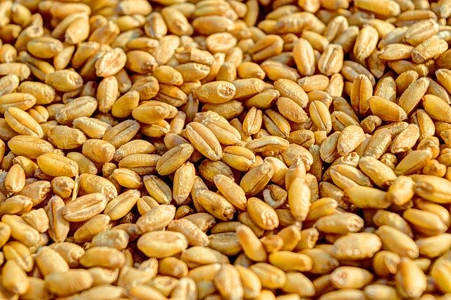 lack of high quality seeds in bihar